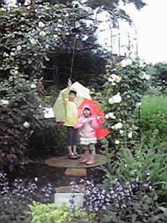 雨の薔薇…